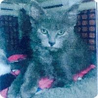 Adopt A Pet :: Anderson - Santa Monica, CA