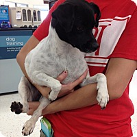 Adopt A Pet :: Sarah - Coral Springs, FL