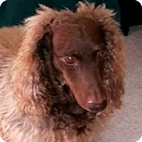 Adopt A Pet :: Bernie Naboo - Houston, TX