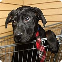 Adopt A Pet :: Cam - Detroit, MI