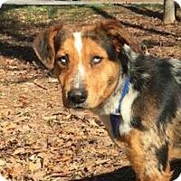Adopt A Pet :: Kylie - Brattleboro, VT