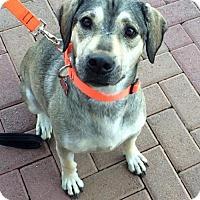 Adopt A Pet :: Mischief - Phoenix, AZ
