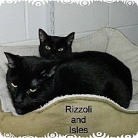 Adopt A Pet :: Rizzoli - Ozark, AL