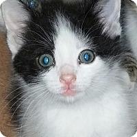 Adopt A Pet :: Popo - Wilmington, NC