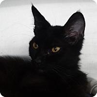 Adopt A Pet :: Avery - Elyria, OH