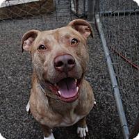 Adopt A Pet :: Jericho - Atlanta, GA