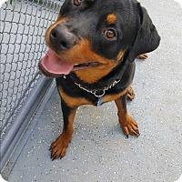 Adopt A Pet :: Rex - Easton, PA