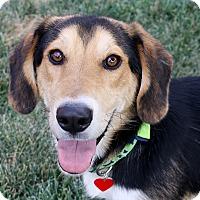 Adopt A Pet :: Marvin - 32 lbs. - Bellflower, CA