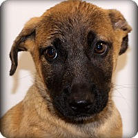 Adopt A Pet :: Superman~ meet me! - Glastonbury, CT