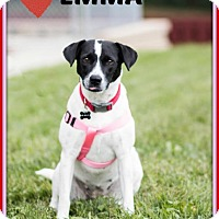 Adopt A Pet :: Emma - Elgin, IL