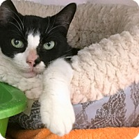 Adopt A Pet :: Annie - Philadelphia, PA