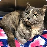 Adopt A Pet :: Annie - Maryville, MO