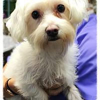 Adopt A Pet :: Benji 2 - Los Alamitos, CA