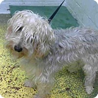 Adopt A Pet :: TUPAC - Atlanta, GA