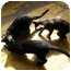 Photo 4 - Domestic Shorthair Cat for adoption in Eldora, Iowa - Peter