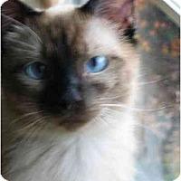 Adopt A Pet :: Krissa - Davis, CA