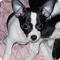 Adopt A Pet :: Black Bart - Oklahoma City, OK