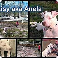 Adopt A Pet :: Daisy aka Anela - Geismar, LA