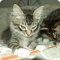 Adopt A Pet :: Misty - Ocala, FL