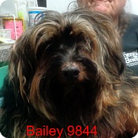 Adopt A Pet :: Bailey - baltimore, MD
