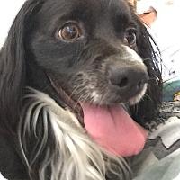 Adopt A Pet :: Jackson - Sacramento, CA