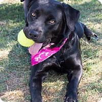Adopt A Pet :: Emma - Patterson, CA