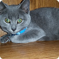 Adopt A Pet :: Shadow - Turnersville, NJ
