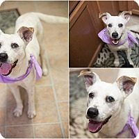 Adopt A Pet :: Lela - West Hartford, CT