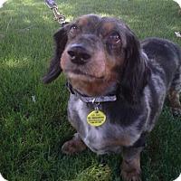 Adopt A Pet :: Maxx2 - Scottsdale, AZ