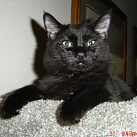 Adopt A Pet :: BLACK JACK PERSHING - Los Angeles, CA