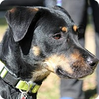 Adopt A Pet :: Yeager - Houston, TX