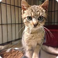 Adopt A Pet :: Ciara - East Brunswick, NJ