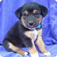 Adopt A Pet :: Cheyenne - Wharton, TX