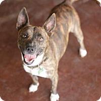 Adopt A Pet :: January - San Antonio, TX