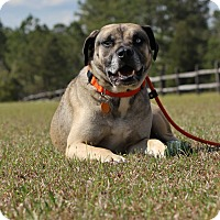 Adopt A Pet :: Simon-Adoption Pending - Pinehurst, NC