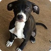 Adopt A Pet :: RAPUNZEL - Rossford, OH