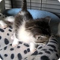 Adopt A Pet :: c-ya - millville, NJ