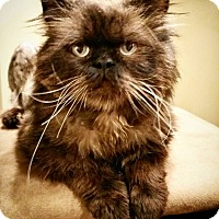 Adopt A Pet :: Stephen Purry - Davis, CA