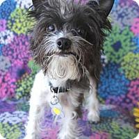 Adopt A Pet :: Ryder - Phoenix, AZ