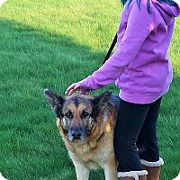 Adopt A Pet :: Boone - Kouts, IN