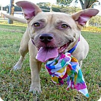 Adopt A Pet :: ASHLEY - Tavares, FL