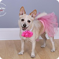 Chihuahua Mix Dog for adoption in Staten Island, New York - Princess