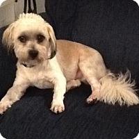 Adopt A Pet :: Teddy Carr - Fresno, CA
