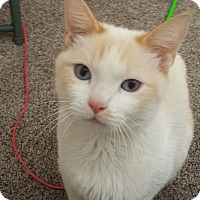 Adopt A Pet :: Wey - Colorado Springs, CO