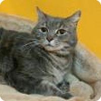 Adopt A Pet :: Alex - Newport, KY