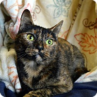 Adopt A Pet :: Taya - Richmond, VA