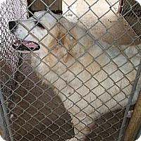 Adopt A Pet :: Candy - Post, TX