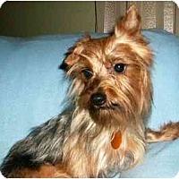 Adopt A Pet :: Scotti - Mooy, AL