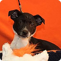 Adopt A Pet :: Manning - Broomfield, CO