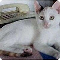 Adopt A Pet :: Splash - Port Republic, MD